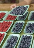 Shopping for berries at the farmer`s market Royalty Free Stock Image
