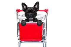 Shopping cart dog Royalty Free Stock Photo
