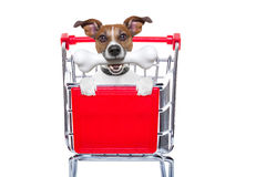 Shopping cart dog. Jack russell dog inside a shopping cart trolley , behind  a blank  empty banner or placard, with a bone in mouth , isolated on white Royalty Free Stock Photos