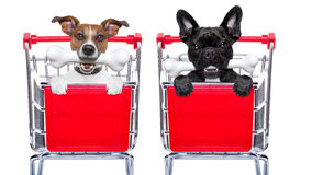 Shopping cart dogs Royalty Free Stock Photo