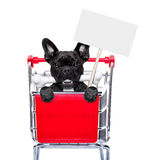 Shopping cart dogs Royalty Free Stock Photography