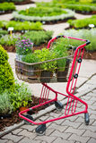 Shopping cart full of herbs and flowers on farmers market Stock Photos