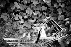 Shopping Cart and Ivy. Black and white shot of a shopping cart in the midst of a bunch of ivy Stock Photos