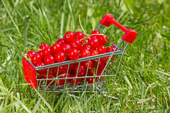 Shopping cart with red currant Royalty Free Stock Photography