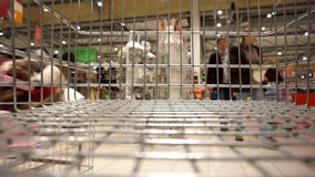 Shopping cart rides through the store. View from inside the shopping cart stock video footage