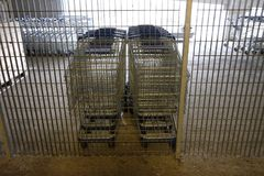 Shopping carts in the underground parking. Day Stock Photo