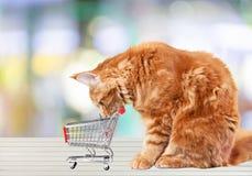 Shopping cat Royalty Free Stock Photo