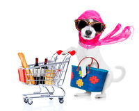 Shopping diva dog Stock Photos