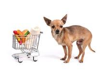 Shopping dog Royalty Free Stock Image