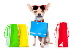 Shopping dog Stock Photo