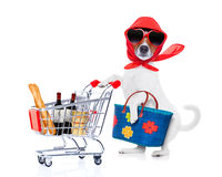 Shopping dog diva royalty free stock photography