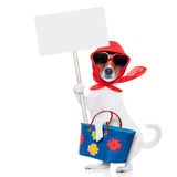 Shopping dog diva Stock Images