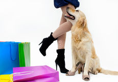 Shopping with dog Royalty Free Stock Image