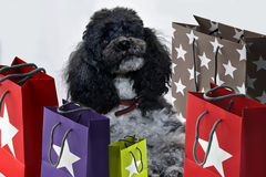 Shopping dog Stock Photography