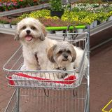 Shopping with the dogs. Shopping with puppys in gardening center Royalty Free Stock Photos