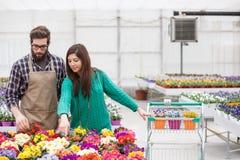 Shopping at greenhouse Royalty Free Stock Image