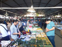 shopping in jade market Stock Images