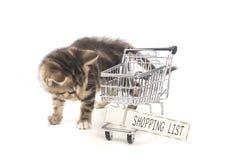 A shopping kitten stock photos