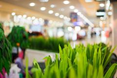 Shopping mall background. With green plant on a first view Royalty Free Stock Photo