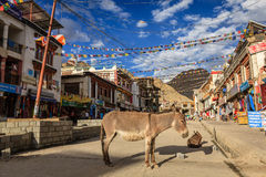 Shopping street in Leh, India Royalty Free Stock Image