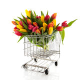 Shopping tulips Stock Photo
