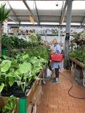 Shopping, vendendo flores e equipamento de jardinagem As flores belamente empacotadas em uns potenciômetros estão em prateleiras Foto de Stock Royalty Free