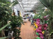 Shopping, vendendo flores e equipamento de jardinagem As flores belamente empacotadas em uns potenciômetros estão em prateleiras Imagens de Stock