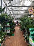 Shopping, vendendo flores e equipamento de jardinagem As flores belamente empacotadas em uns potenciômetros estão em prateleiras Fotografia de Stock