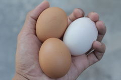 Duck egg and fresh hens eggs on my hand. Shopping white and brown fresh hens eggs on my hand Stock Photo
