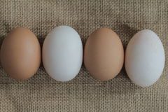 Eggs and duck eggs. Shopping white and brown fresh hens eggs on my hand Stock Photos