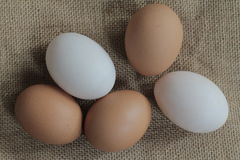 Fresh hens eggs and duck eggs. Shopping white and brown fresh hens eggs on my hand Stock Photos