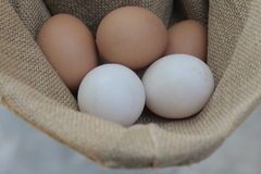 Fresh hens eggs and duck eggs. Shopping white and brown fresh hens eggs on my hand Stock Photo
