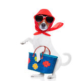 Shoppinghunddiva royaltyfri fotografi