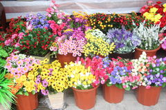 Shops selling various Decorative flower Royalty Free Stock Photography