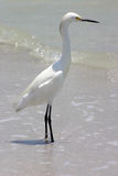 By the Shore. Waterbird by the shore Madeira Beach Florida royalty free stock photography