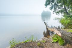 Shore of autumnal foggy lake. Stock Photo