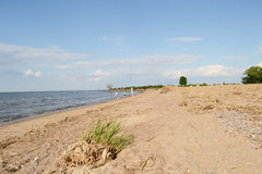 Shore of the Baltic Sea. Stock Images
