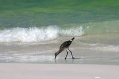 Shore bird Royalty Free Stock Photos
