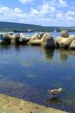 Shore bird hunting Royalty Free Stock Image