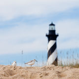 Shore birds and Cape Hatteras Lighthouse NC US Royalty Free Stock Photo