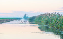 Shore of a canal in the countryside at dawn Stock Images