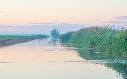 Shore of a canal in the countryside at dawn Royalty Free Stock Images
