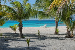 Shore coconut trees beach recliner and lagoon Stock Photography