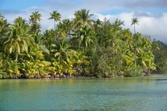 Shore with coconut trees and tourists riding horse Royalty Free Stock Photo