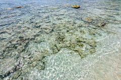Shore coral reefs Stock Images