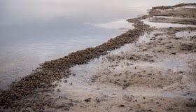 Shore of crabs Stock Photo