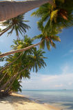 Shore diagonal. View of a few palms on the tropic bay early in the morning stock photo