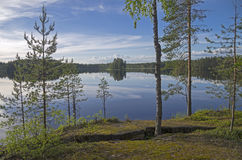 On the shore of the forest lake. Royalty Free Stock Photography