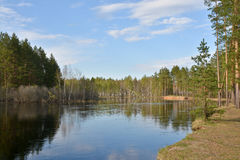 Shore the forest river in springtime. Stock Images