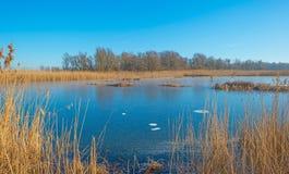 Shore of a frozen lake Royalty Free Stock Photos